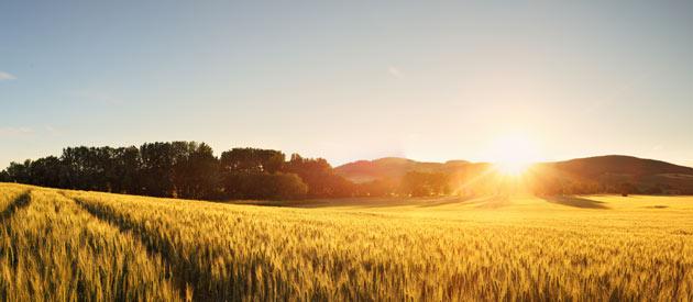 Schweizer Reneke - farming lands
